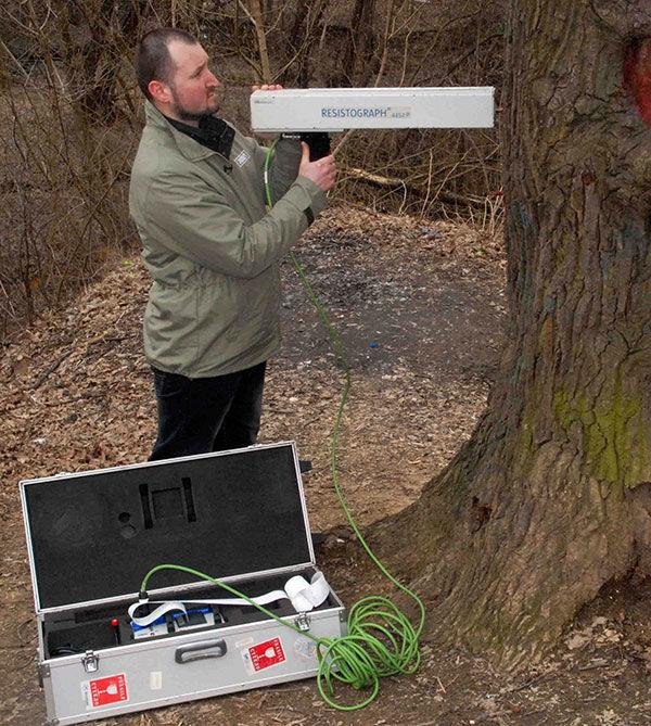 Инструментальное обследование дерева