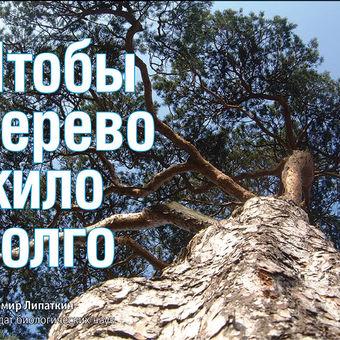 Дуб. Свойства древесины. Полезные свойства.
