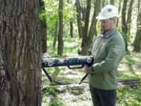 обследование деревьев